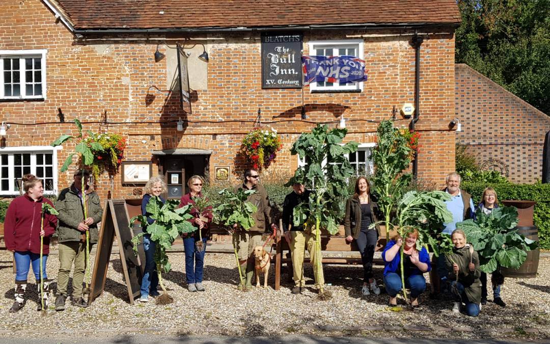 The Annual Cabbage Walking Stick Competition – 2020
